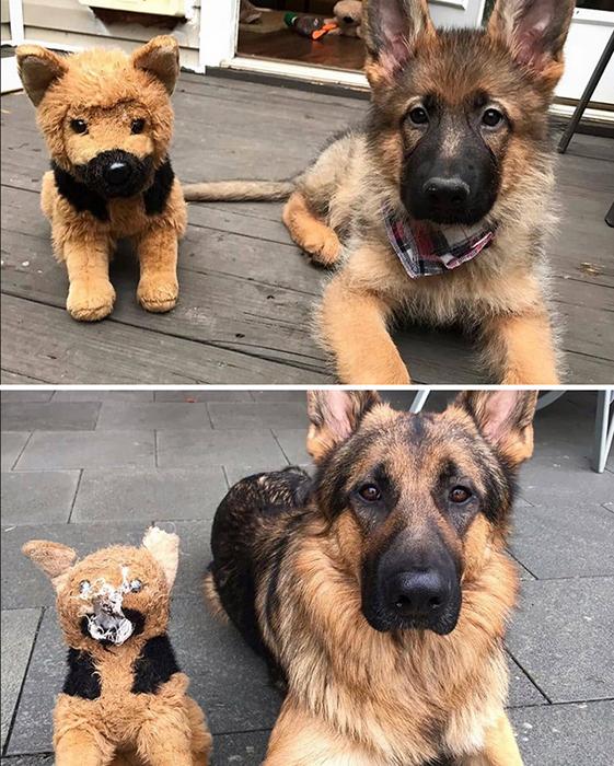 Хороший мальчик растёт со своей любимой игрушкой.