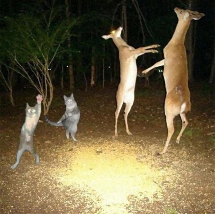 Танцы с оленями.
