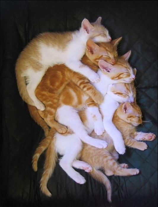 Пирамида из котов.