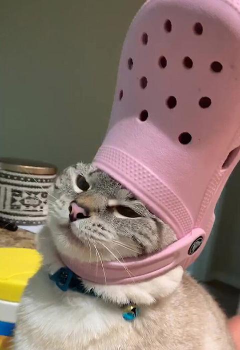 Этот кот отомстит. Жестоко. Это видно по его морде.