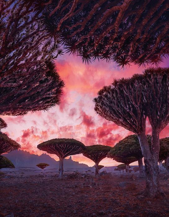 Драконовы деревья придают пейзажу некой инопланетности.