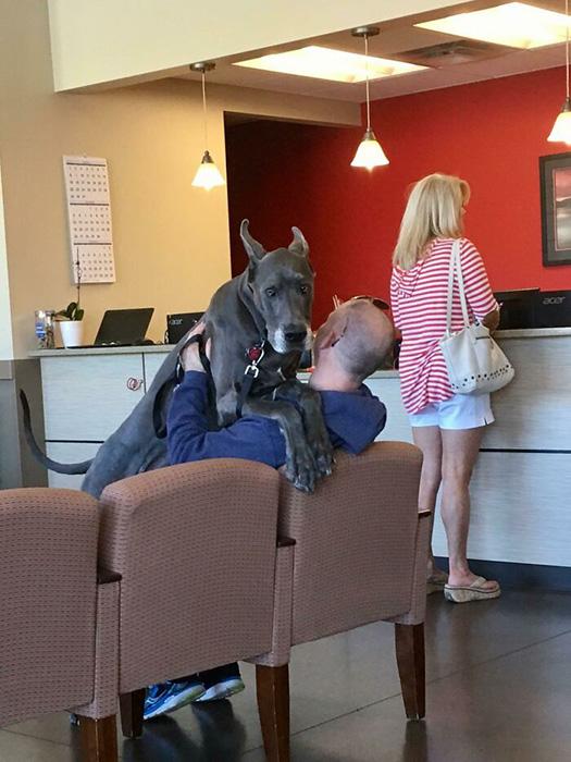 Больших собак тоже может напугать ветеринар.