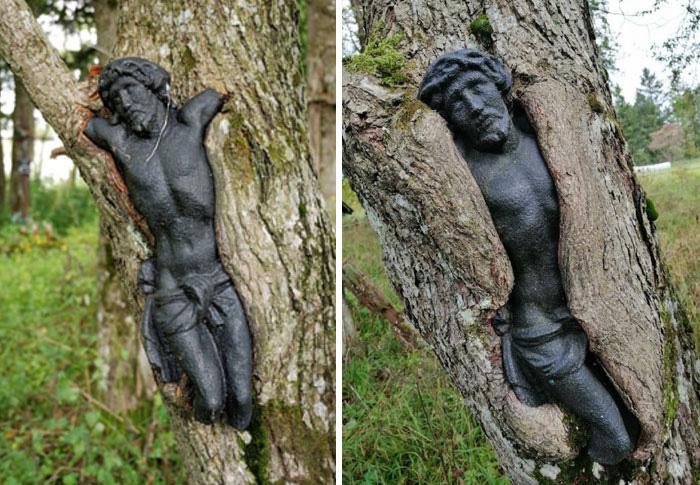 Скульптура Иисуса Христа на заброшенном кладбище в Польше медленно поглощается деревом.