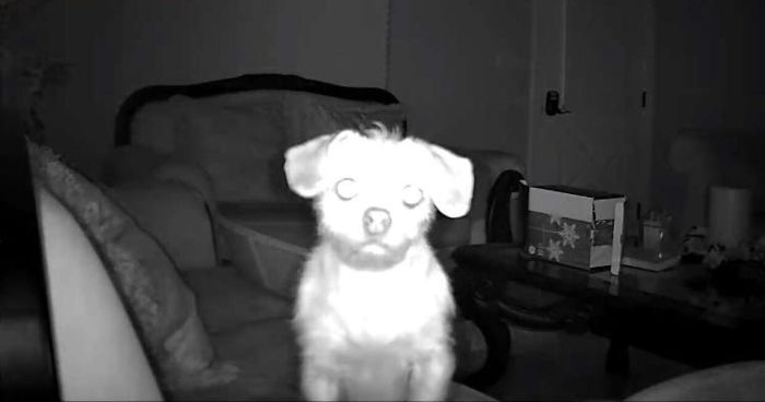 Проснулся посреди ночи и получил уведомление о том, что моя камера безопасности обнаружила движение. Мгновенный сердечный приступ.