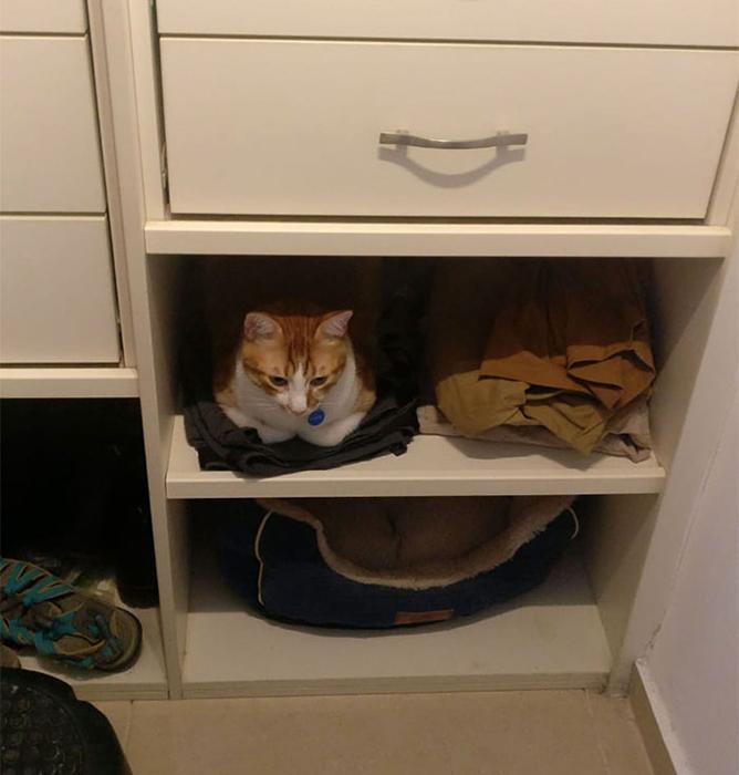 Моя кошка недавно спала на моих штанах на нижней полке нашего шкафа, поэтому я попросил жену сдвинуть штаны и поставить туда кошачью кровать. Ответ кошки.