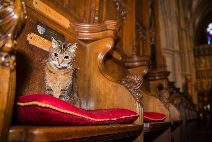 Кошка привлекла к посещению церкви многих людей.