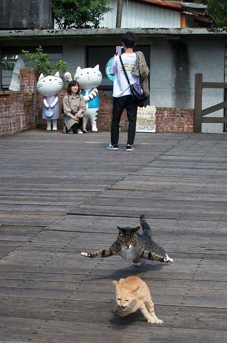 Кошки выглядят так, как будто они снимаются в фильме о боевых искусствах.