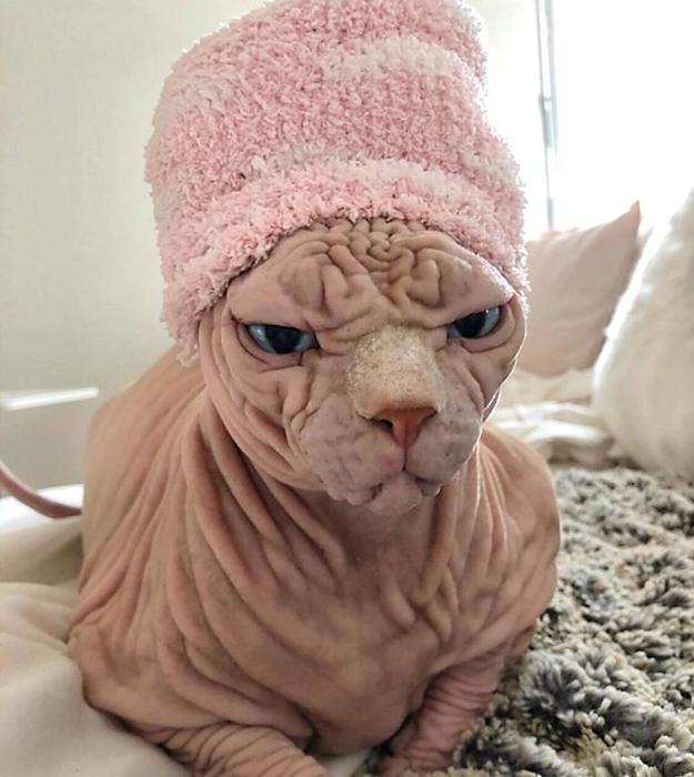 Кажется ему не очень идёт эта шапка.