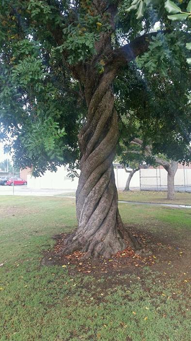 Идеально извилистое дерево.