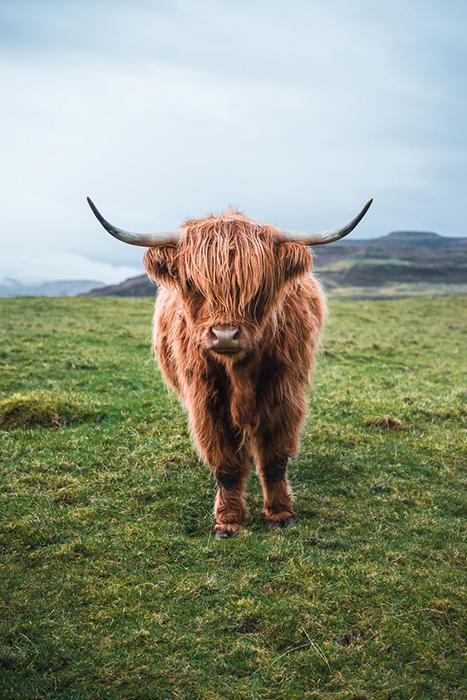 Остров Скай, Шотландия, Великобритания.