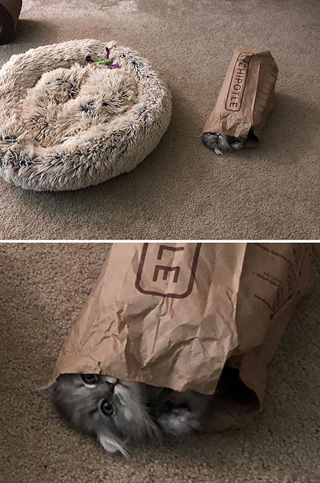Зачем покупать кошачьи лежаки? Бумажный пакет однозначно лучше!