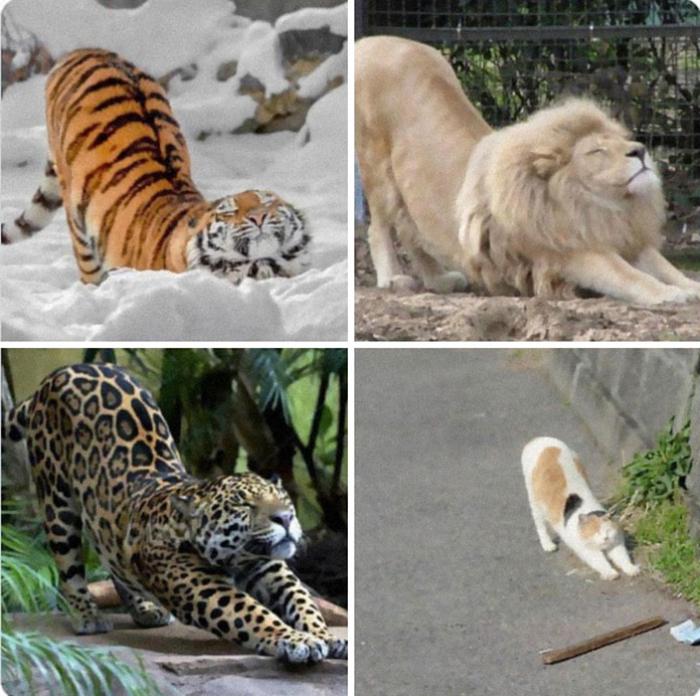 Растяжка кошки доставляет такое удовольствие, и не только для мелких кошачьих.