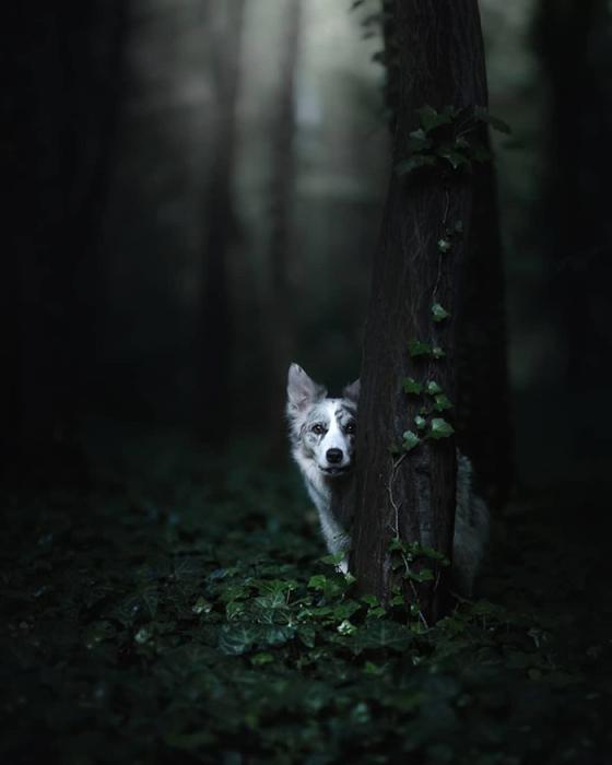 Фотограф снимает и бездомных животных, и живущих в приютах.