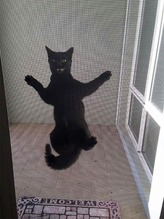 Улыбка этого котика как-то заставляет нервничать.