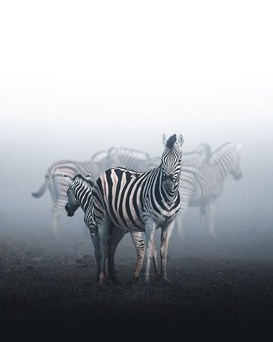 Национальный парк Этоша, Намибия.