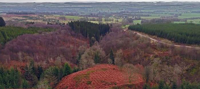 Так выглядит это скрытое лесной чащей место.
