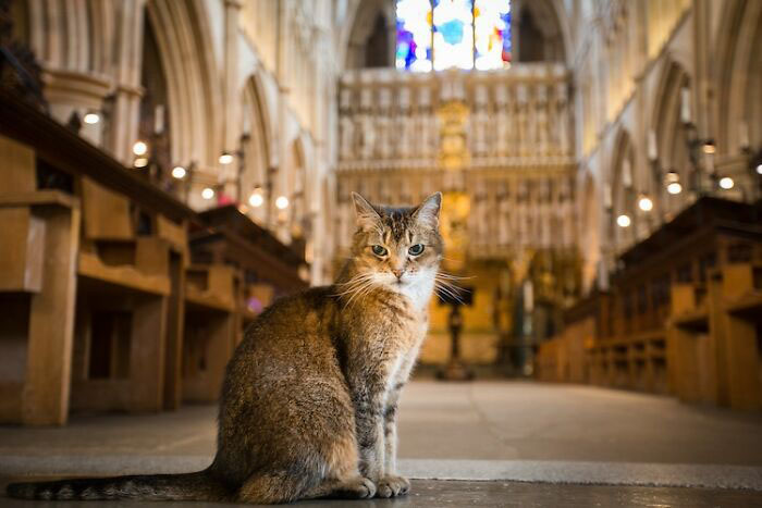 Кошка стала важной частью церковного сообщества, завоевав сердца как духовенства, так и посетителей.