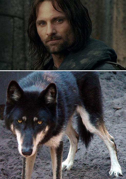 Судя по лицу Арагорна - он всегда считал себя волком.