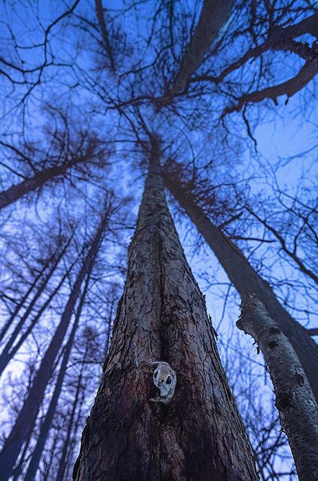 Белки любят высокие деревья.