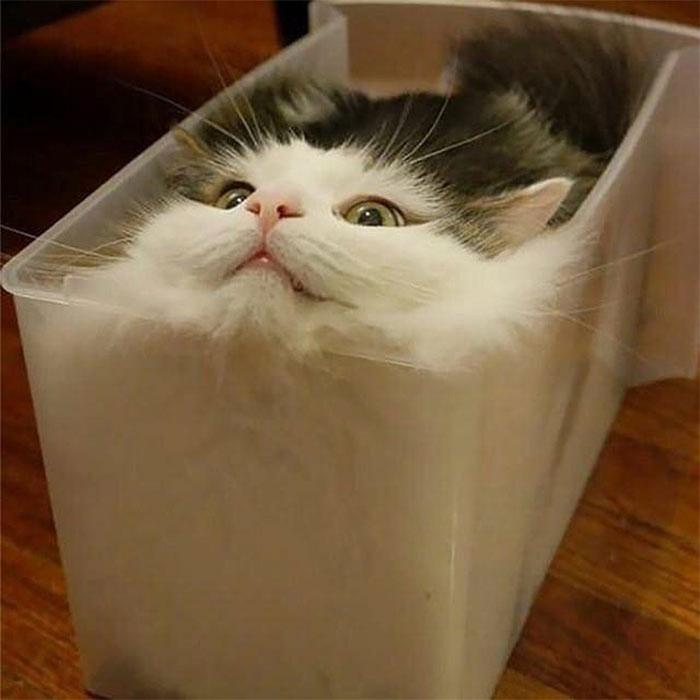 Мне удобно, честное кошачье!