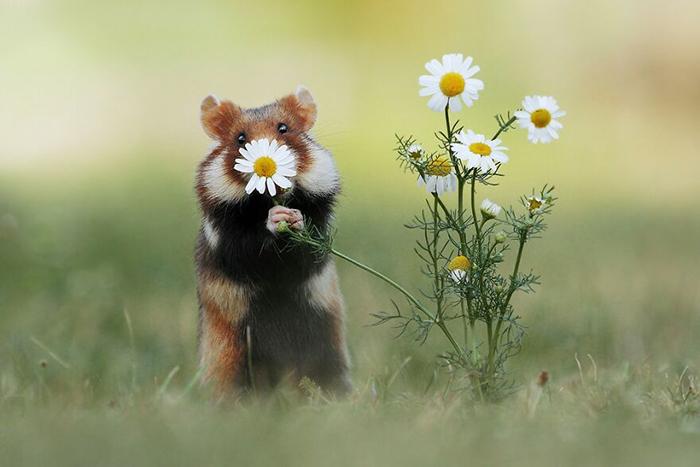 Я принёс тебе цветочек.