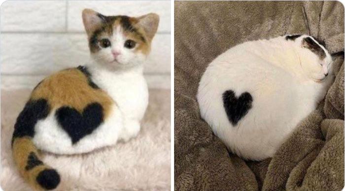 Кошки - это любовь. Вот доказательства.