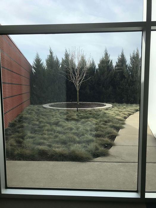 В Мемориальном музее Холокоста в Детройте есть дерево Анны Франк.