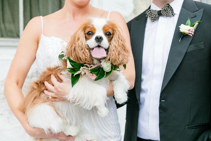 Финалист выставки портретов собак, фотограф Дана Каббидж, Чарльстон, Южная Каролина.