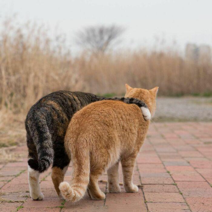 Каждому нужно иногда, чтобы его кто-то обнял.