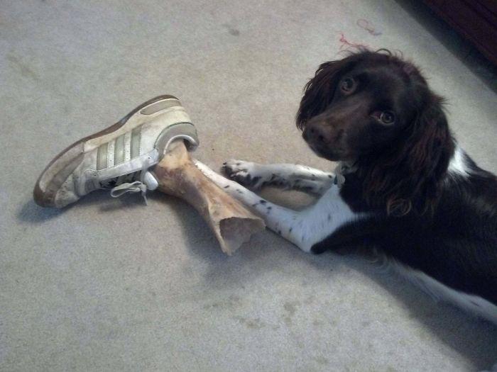Когда собака напугала хозяина просто до чёртиков.