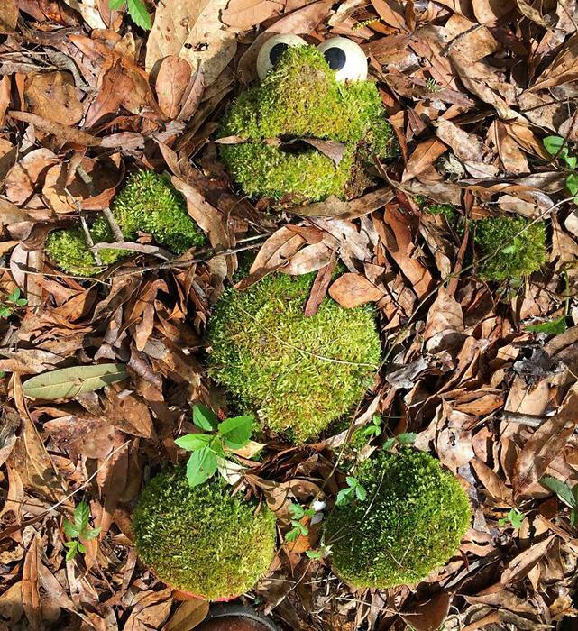 Ткань и набивка создали влажную грубую поверхность, которую использовал мох.
