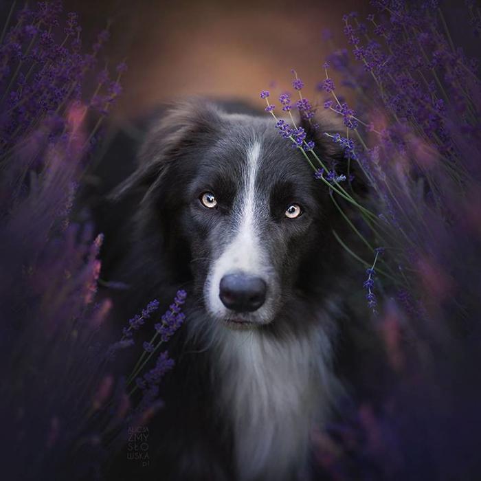 Портреты животных у Алиши Змысловской просто восхитительны.