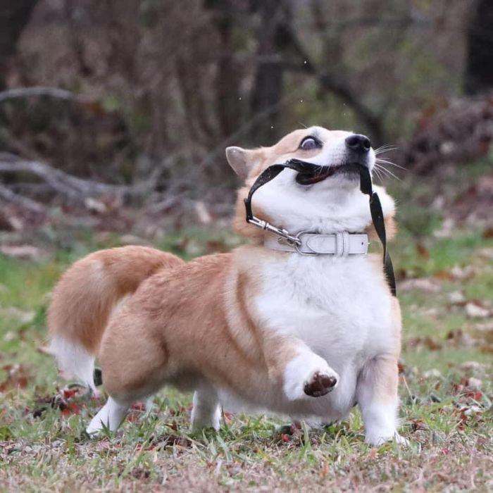 Джен выделяется среди других собак.