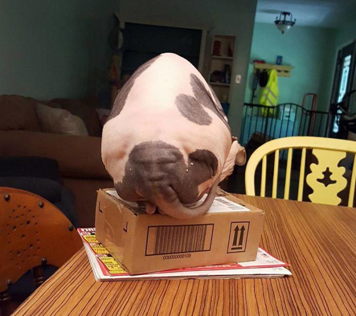 Очень похоже, что у этого кота лицо на попе.