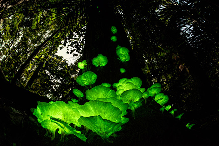 Магия грибов. / Фото: Юрген Фройнд (Германия / Австралия)