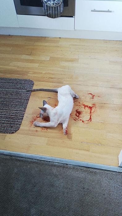 Кот напугал меня этим утром. На самом деле - это паприка.