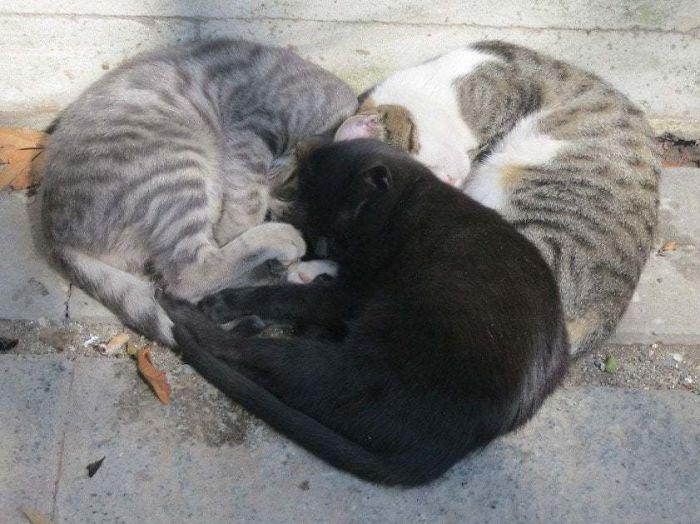 По-моему они любят друг друга.