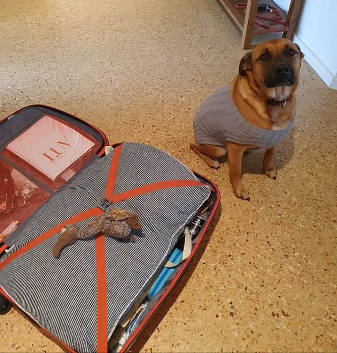 По-моему, хозяин забыл самое главное, когда укладывал чемодан.