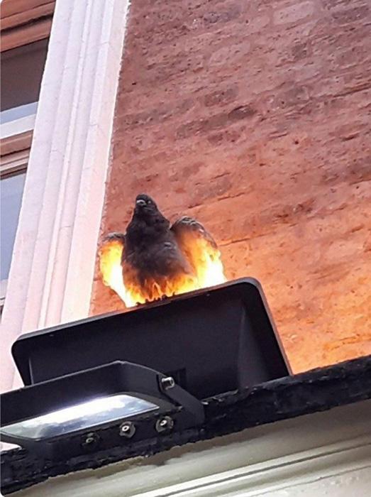 Птица-феникс???