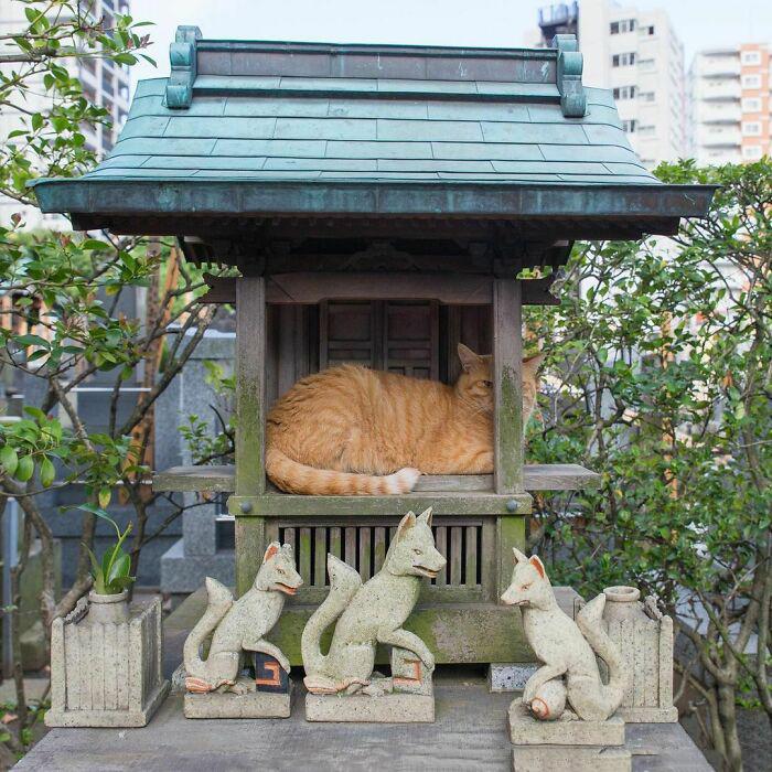 Это лисий храм, но в приципе, сойдёт.