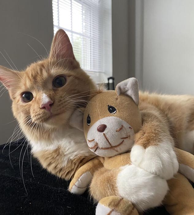 Любимая игрушка - это та, которая похожа на меня!