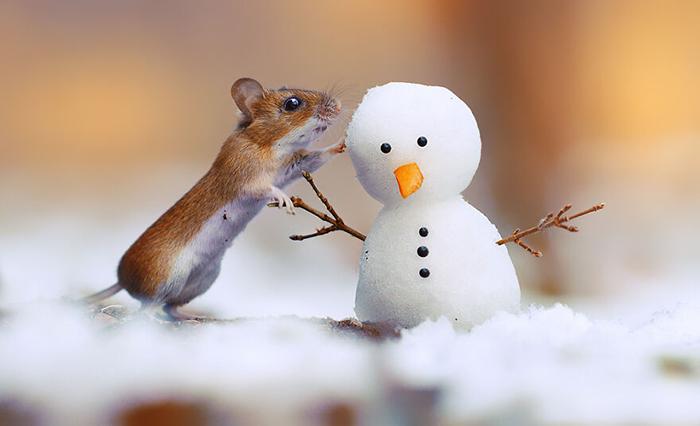 Маленькая мышка с крохотным Олафом!