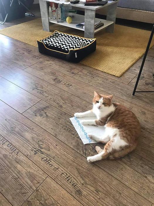Дорогая новая кровать не в счёт! Упавшая на пол кухонная салфетка самое то!