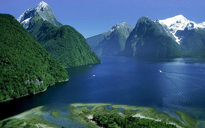 В Новую Зеландию ежей завезли британские колонизаторы.