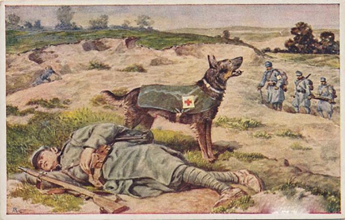 Умные животные были специально обучены вынюхивать раненых, потерявших сознание.