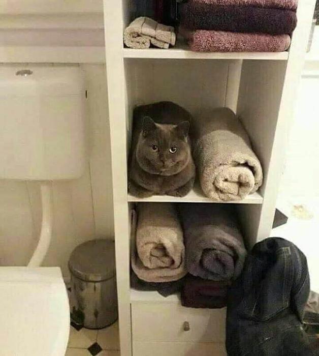 Сдаюсь, ты нашёл меня!