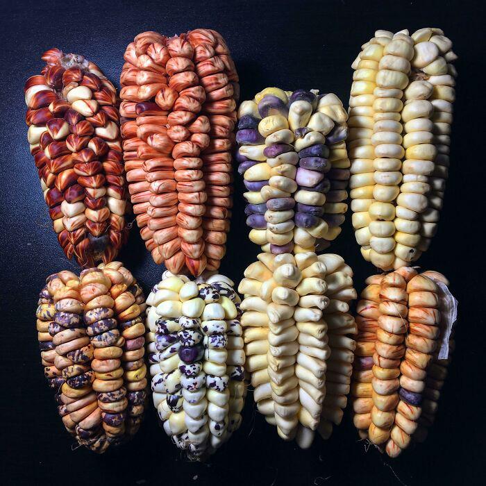 Насколько красивой может быть обычная кукуруза.