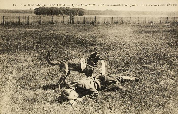 Французская собака-медик обнаружила раненого. Открытка, 1914 г. Фото: Frankfurter Allgemeine.