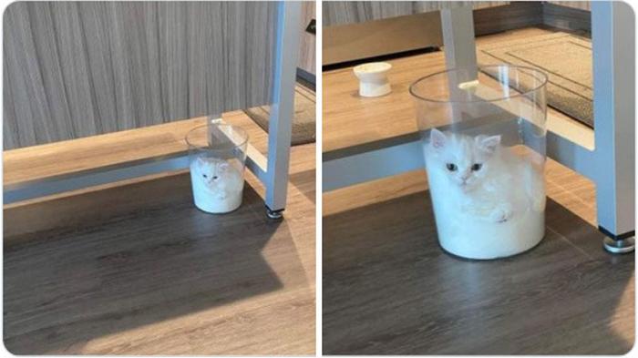 Кошки - это жидкость.