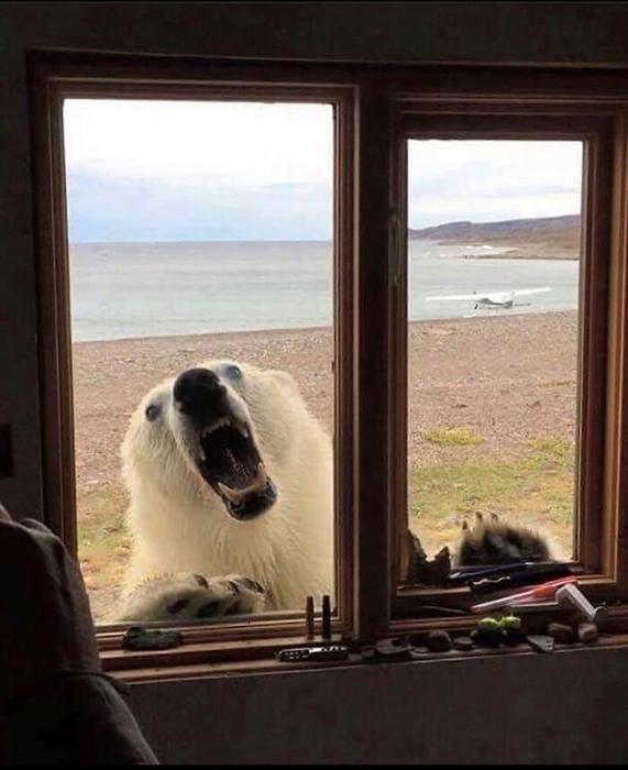 Домик на Аляске в аренду - прекрасный вид на медведя, который пришёл, наверное, поздороваться.